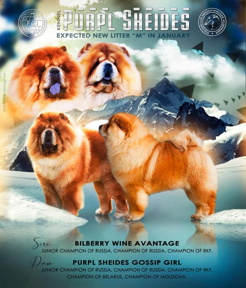 Chow Chow kennel